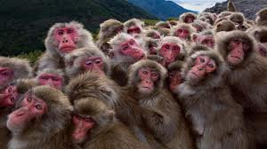 monkeys huddling